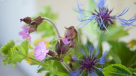 Omgeving 1200x675 bloem paars