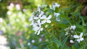 Omgeving 1200x675 bloem wit